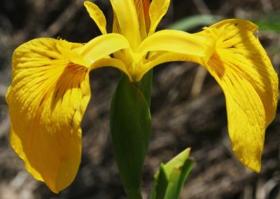 Observación de flora
